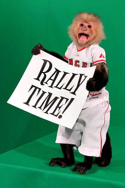 The Halos Should Adopt The Rally Monkey As A Mascot